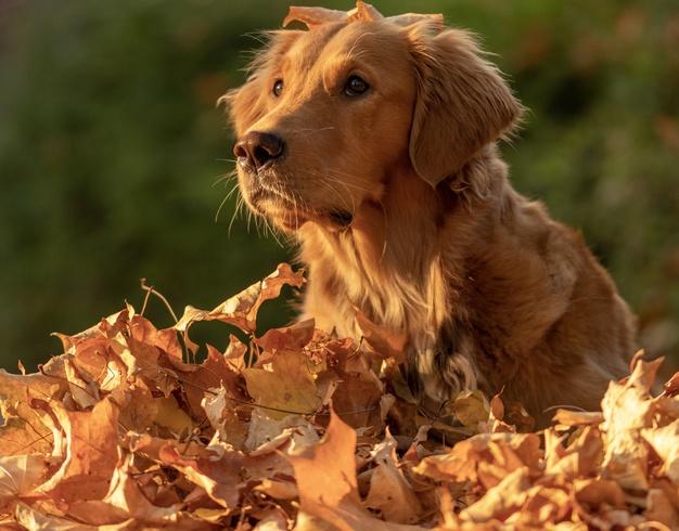 10 raças de cachorros grandes