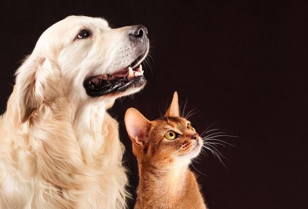 Cachorro e gato podem viver juntos? Confira dicas