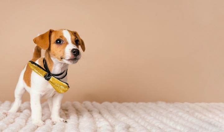 10 raças de cachorros pequenos