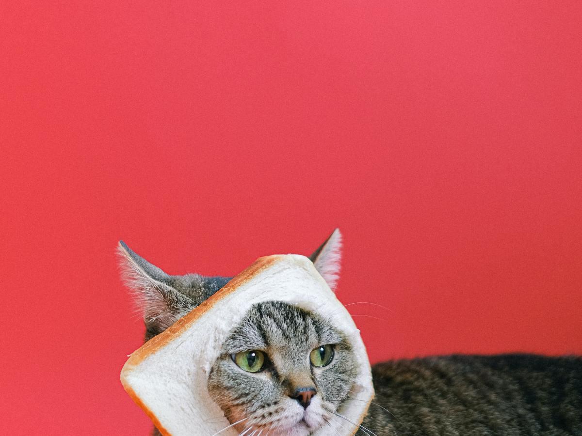 Como fazer a dieta do gato
