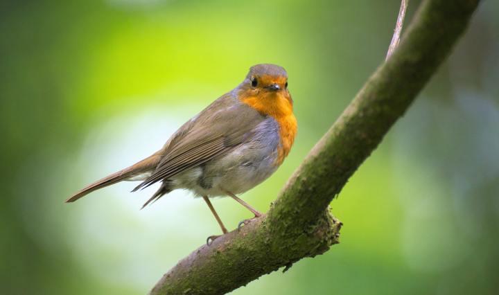 Como alimentar seu pássaro