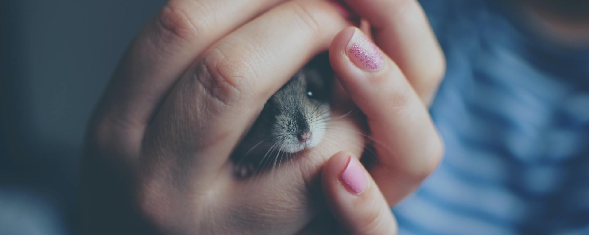 Tudo sobre hamster