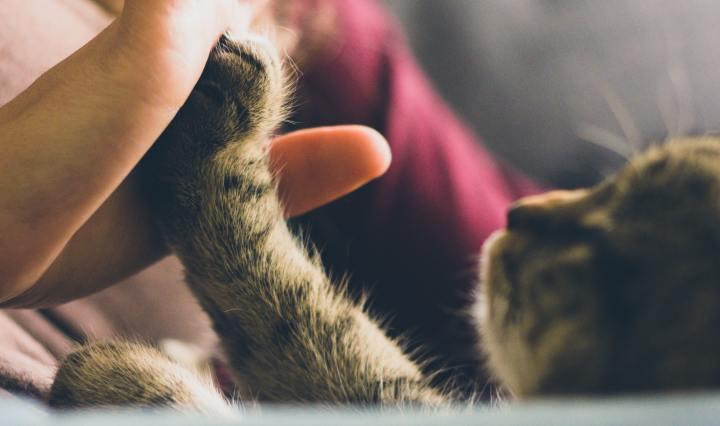 Como adotar um gato
